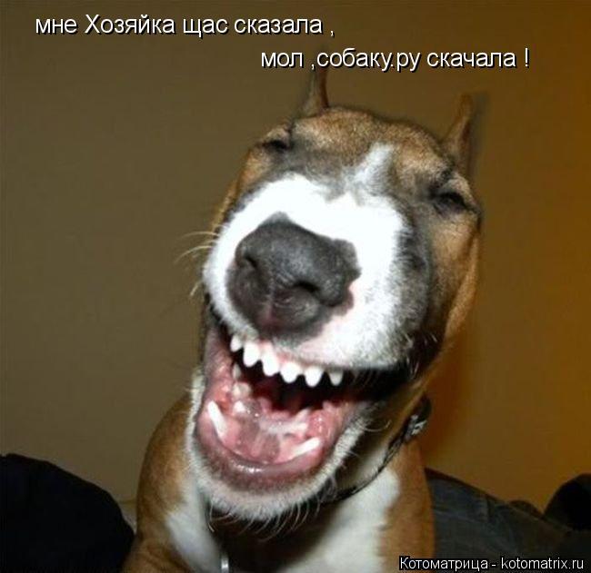 Котоматрица: мне Хозяйка щас сказала , мол ,собаку.ру скачала !
