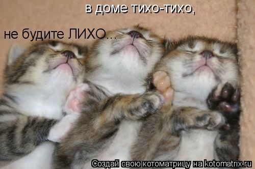 Котоматрица: в доме тихо-тихо, не будите ЛИХО...