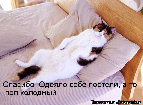 Котоматрица: Спасибо! Одеяло себе постели, а то пол холодный