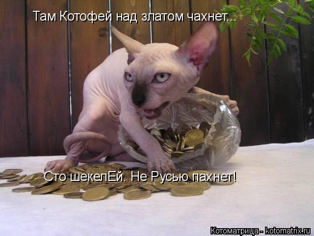 Котоматрица: Там Котофей над златом чахнет... Сто шекелЕй. Не Русью пахнет!