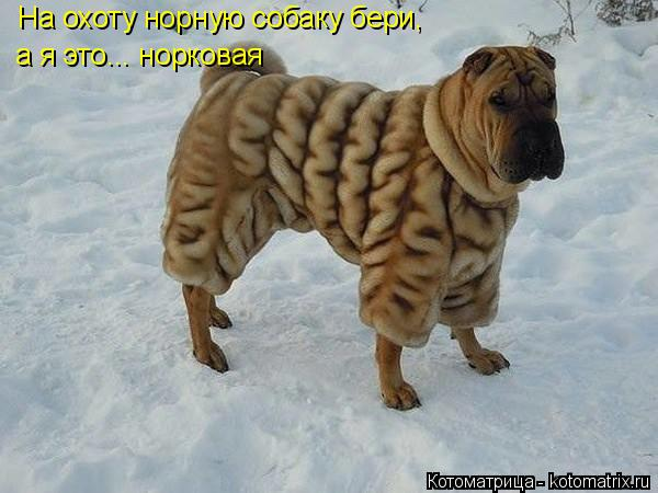 Котоматрица: На охоту норную собаку бери, а я это... норковая