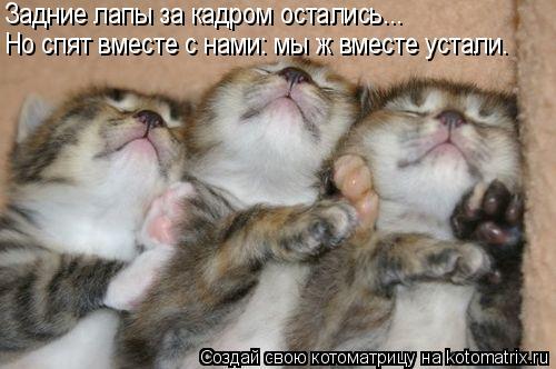 Котоматрица: Но спят вместе с нами: мы ж вместе устали. Задние лапы за кадром остались...