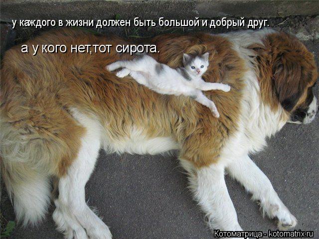 Котоматрица: у каждого в жизни должен быть большой и добрый друг. а у кого нет,тот сирота.