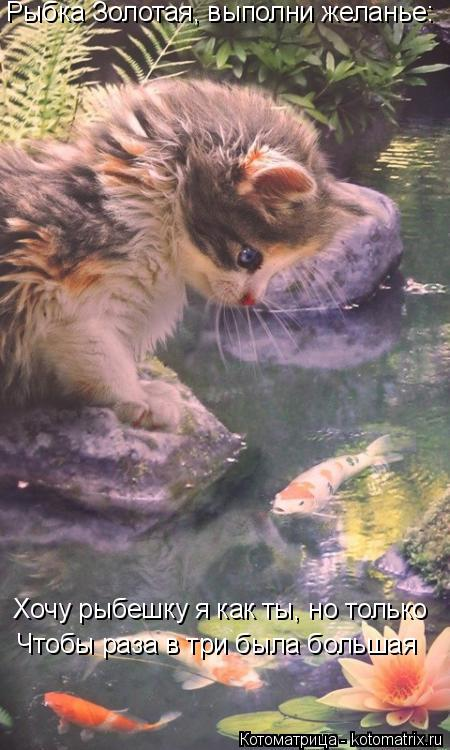 Котоматрица: Рыбка Золотая, выполни желанье: Хочу рыбешку я как ты, но только Чтобы раза в три была большая