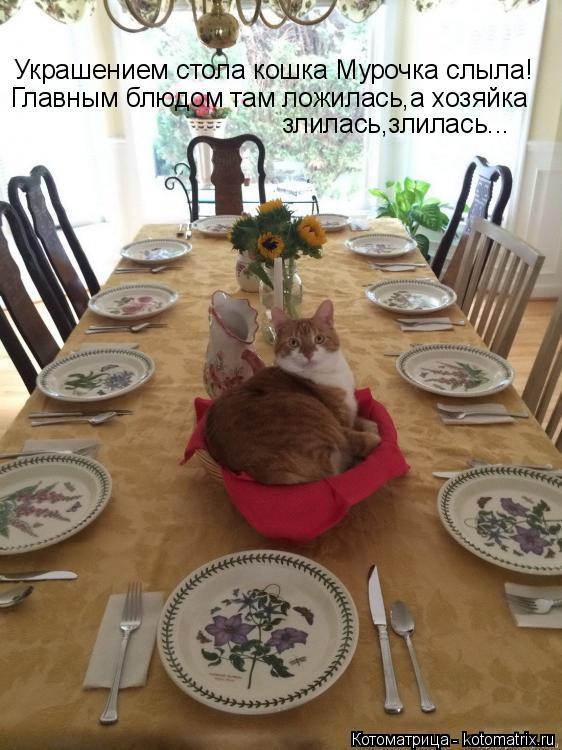 Котоматрица: Украшением стола кошка Мурочка слыла! Главным блюдом там ложилась,а хозяйка  злилась,злилась...
