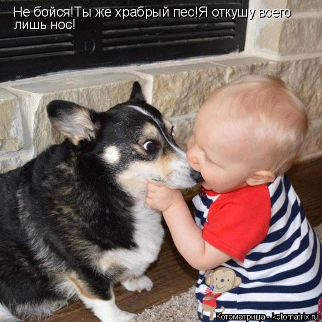 Котоматрица: Не бойся!Ты же храбрый пес!Я откушу всего  лишь нос!