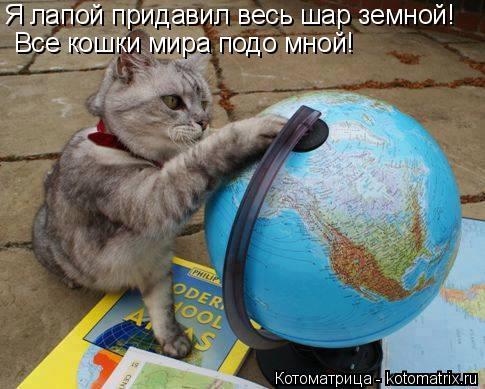 Котоматрица: Все кошки мира подо мной! Я лапой придавил весь шар земной!