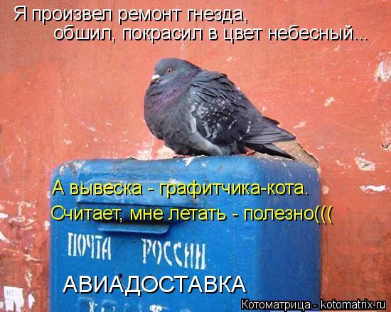 Котоматрица: Я произвел ремонт гнезда,  обшил, покрасил в цвет небесный... А вывеска - графитчика-кота. Считает, мне летать - полезно((( АВИАДОСТАВКА