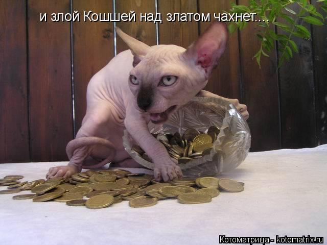 Котоматрица: и злой Кошшей над златом чахнет....