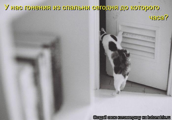 Котоматрица: У нас гонения из спальни сегодня до которого  часа?