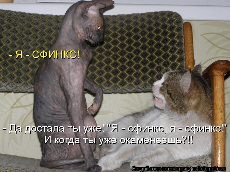 """Котоматрица: - Я - СФИНКС! - Да достала ты уже! """"Я - сфинкс, я - сфинкс!"""" И когда ты уже окаменеешь?!!"""