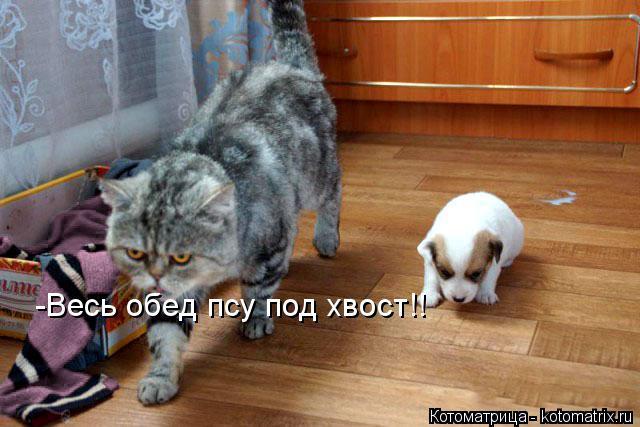 Котоматрица: -Весь обед псу под хвост!!