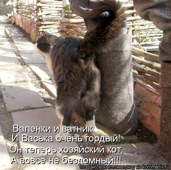 Котоматрица: И Васька очень гордый! Он теперь хозяйский кот, А вовсе не бездомный!!! Валенки и ватник.