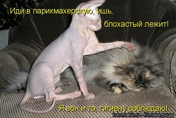 Котоматрица: Иди в парикмахерскую, ишь,  блохастый лежит! Я вон и то, гигиену соблюдаю!