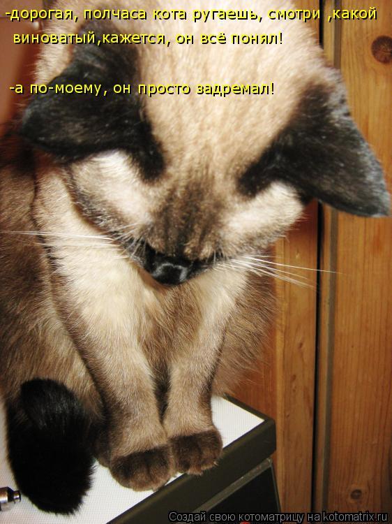 Котоматрица: -дорогая, полчаса кота ругаешь, смотри ,какой виноватый,кажется, он всё понял! -а по-моему, он просто задремал!