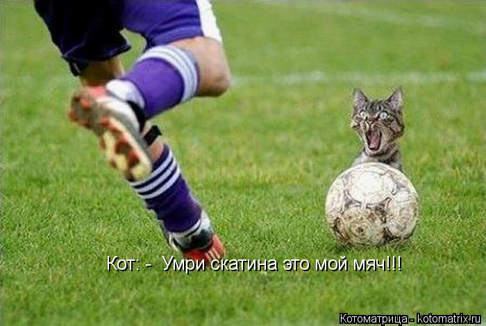 Котоматрица: Кот: -  Умри скатина это мой мяч!!!
