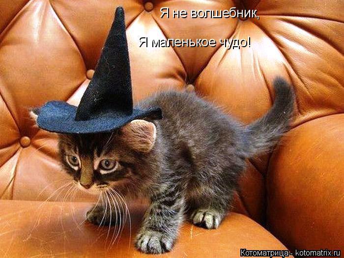 Котоматрица: Я не волшебник,  Я маленькое чудо!