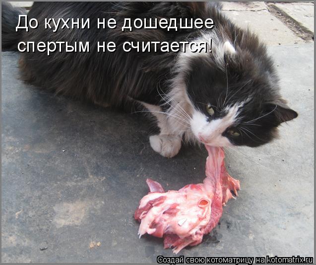 Котоматрица: До кухни не дошедшее спертым не считается!