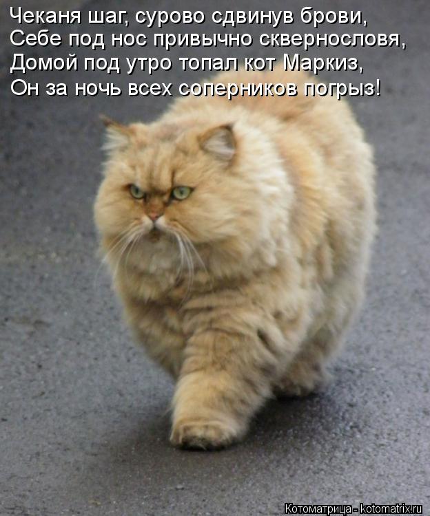 Котоматрица: Чеканя шаг, сурово сдвинув брови, Себе под нос привычно сквернословя, Домой под утро топал кот Маркиз, Он за ночь всех соперников погрыз!