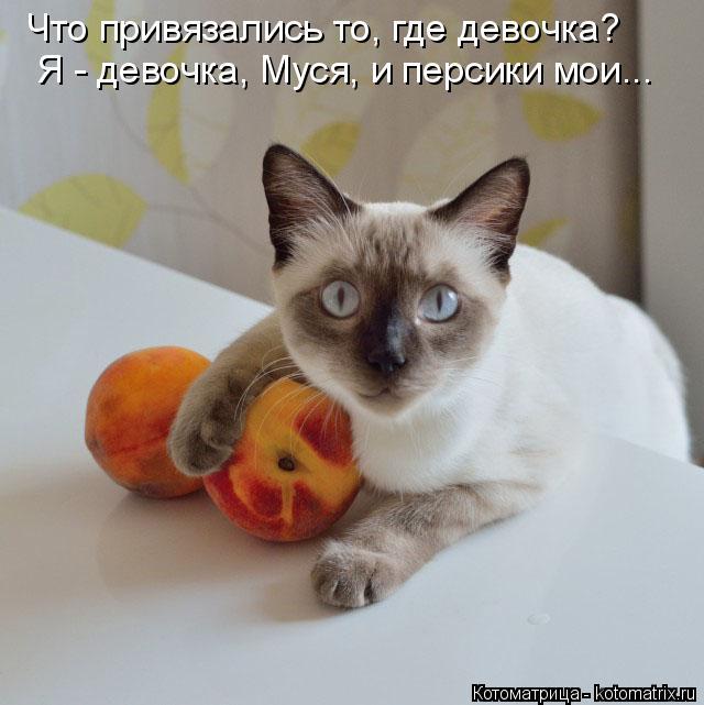Котоматрица: Я - девочка, Муся, и персики мои... Что привязались то, где девочка?