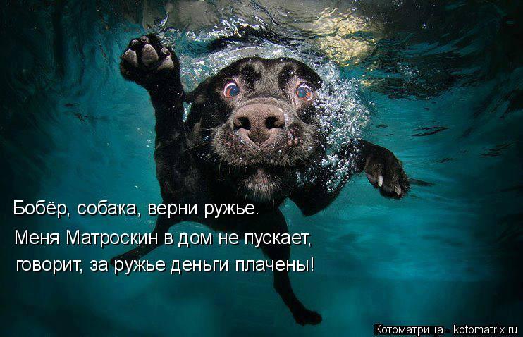 Котоматрица: Бобёр, собака, верни ружье.   Меня Матроскин в дом не пускает,  говорит, за ружье деньги плачены!