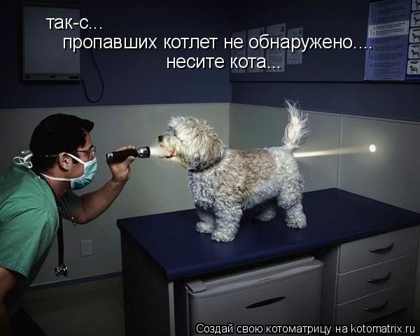 Котоматрица: так-с... пропавших котлет не обнаружено.... несите кота...