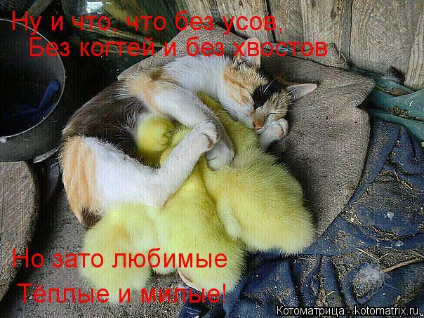 Котоматрица: Ну и что, что без усов, Без когтей и без хвостов Но зато любимые Тёплые и милые!