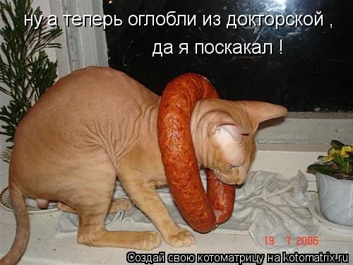 http://kotomatrix.ru/images/lolz/2014/09/22/kotomatritsa_Om.jpg