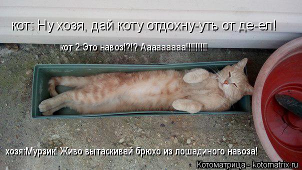Котоматрица: кот: Ну хозя, дай коту отдохну-уть от де-ел! хозя:Мурзик! Живо вытаскивай брюхо из лошадиного навоза! кот 2:Это навоз!?!? Ааааааааа!!!!!!!!!