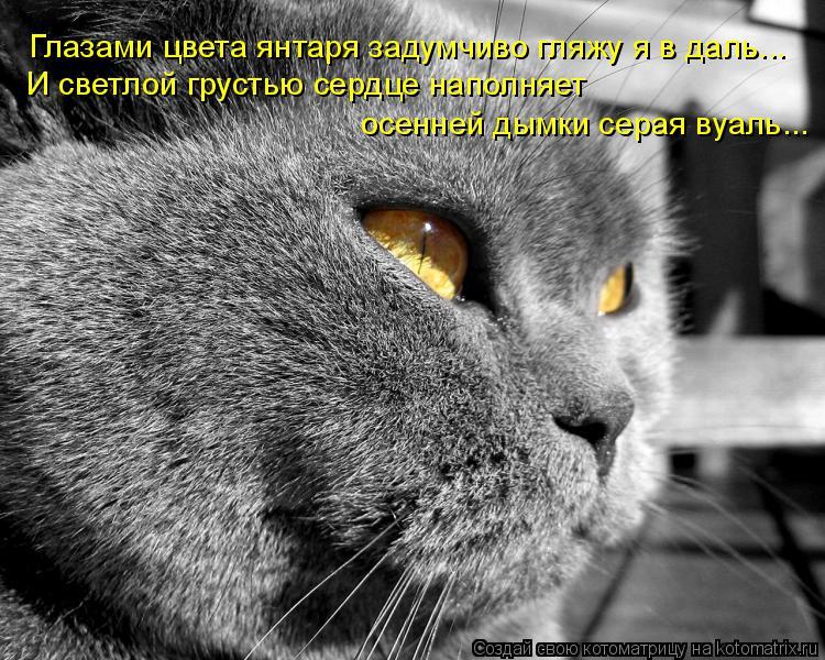 Котоматрица: Глазами цвета янтаря задумчиво гляжу я в даль... И светлой грустью сердце наполняет осенней дымки серая вуаль...