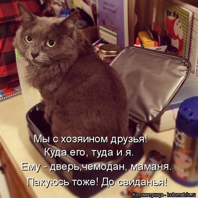 Котоматрица: Мы с хозяином друзья! Куда его, туда и я. Ему - дверь,чемодан, маманя. Пакуюсь тоже! До свиданья!