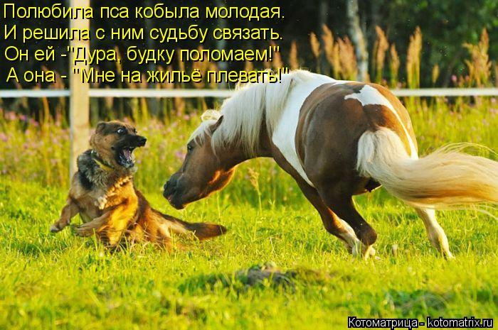 """Котоматрица: А она - """"Мне на жильё плевать!"""" Полюбила пса кобыла молодая. И решила с ним судьбу связать. Он ей -""""Дура, будку поломаем!"""""""