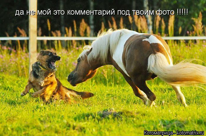 http://kotomatrix.ru/images/lolz/2014/09/22/kotomatritsa_s4.jpg
