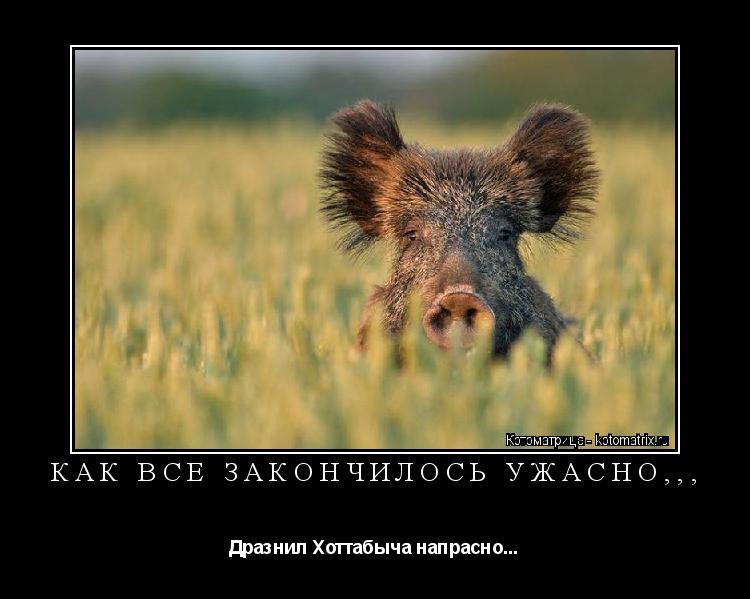 Котоматрица: КАК ВСЕ ЗАКОНЧИЛОСЬ УЖАСНО,,, Дразнил Хоттабыча напрасно...