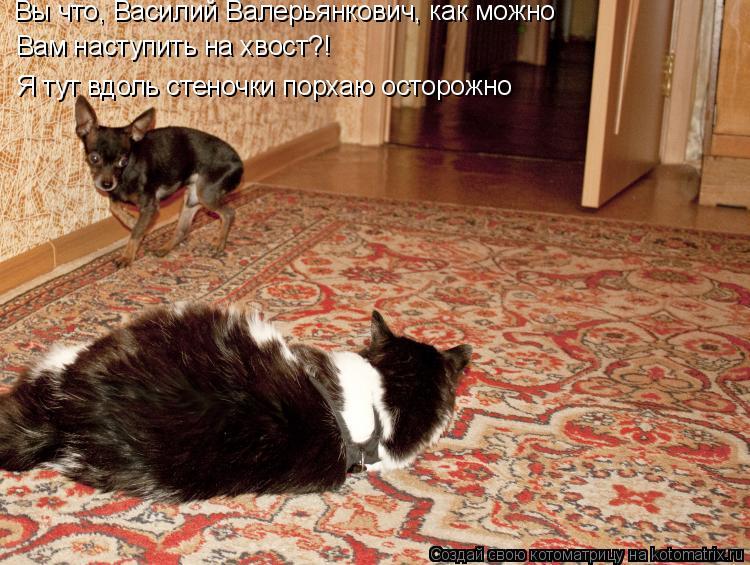 Котоматрица: Вы что, Василий Валерьянкович, как можно Вам наступить на хвост?! Я тут вдоль стеночки порхаю осторожно