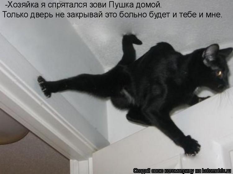 Котоматрица: -Хозяйка я спрятался зови Пушка домой. Только дверь не закрывай это больно будет и тебе и мне.