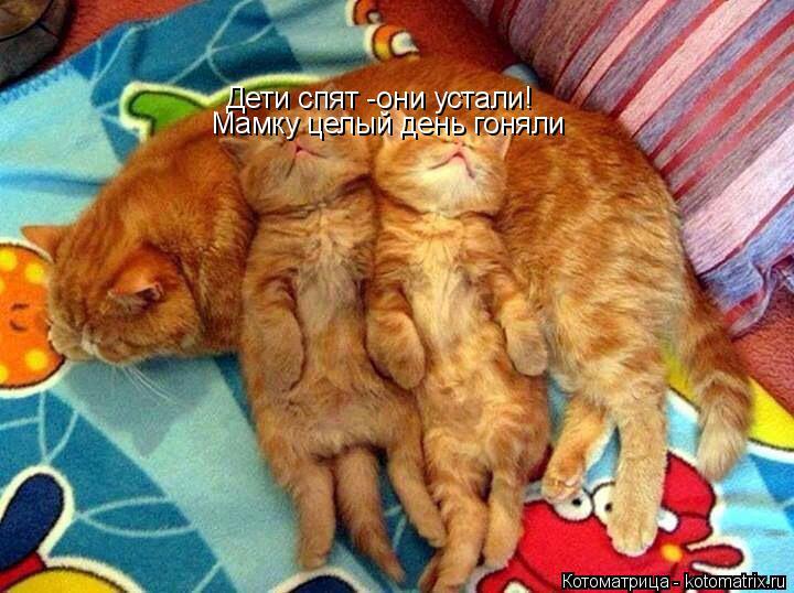 Котоматрица: Дети спят -они устали! Мамку целый день гоняли