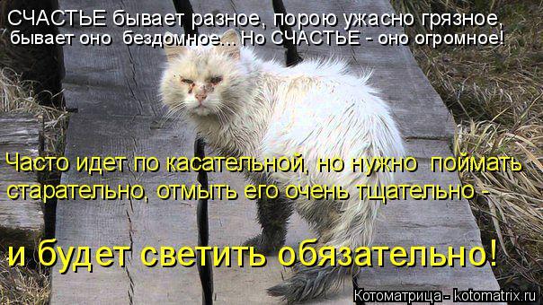 Котоматрица: СЧАСТЬЕ бывает разное, порою ужасно грязное,  бывает оно  бездомное... Но СЧАСТЬЕ - оно огромное! Часто идет по касательной, но нужно  поймать