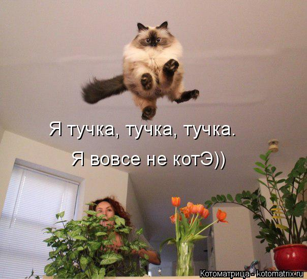 Котоматрица: Я тучка, тучка, тучка.  Я вовсе не котЭ))