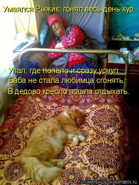 Котоматрица: Умаялся Рыжик: гонял весь день кур.  Упал, где попало и сразу уснул. Баба не стала любимца сгонять, В дедово кресло пошла отдыхать.