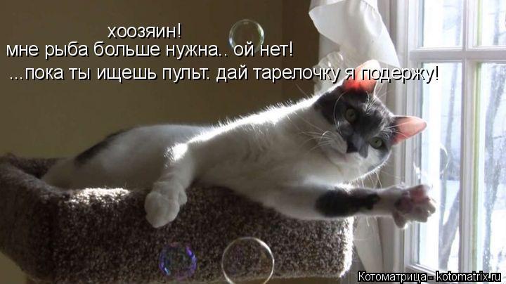Котоматрица: хоозяин! мне рыба больше нужна.. ой нет! ...пока ты ищешь пульт. дай тарелочку я подержу!