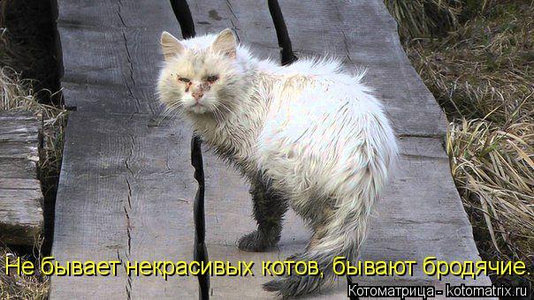 Котоматрица: Не бывает некрасивых котов, бывают бродячие.