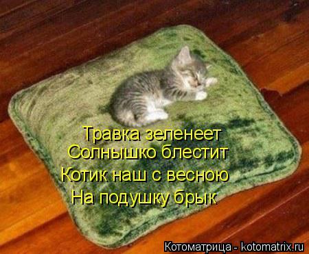Котоматрица: Травка зеленеет Солнышко блестит Котик наш с весною На подушку брык