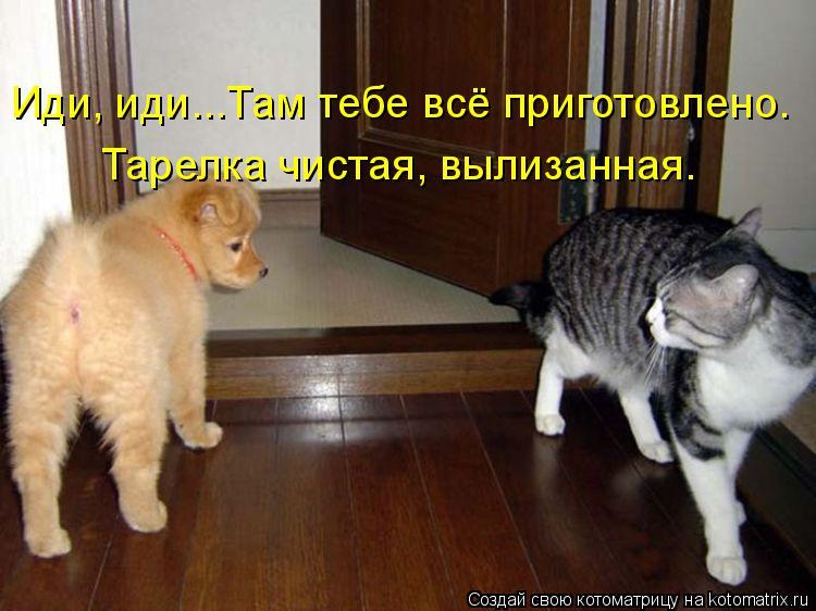 http://kotomatrix.ru/images/lolz/2014/09/23/kotomatritsa_qo.jpg