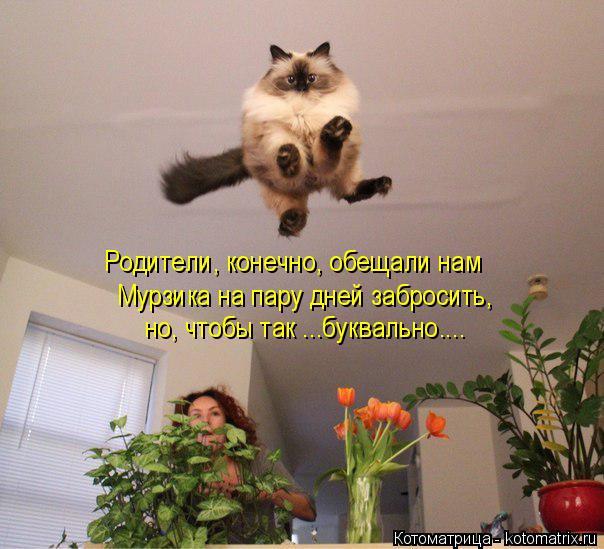 Котоматрица: Родители, конечно, обещали нам Мурзика на пару дней забросить, но, чтобы так ...буквально....
