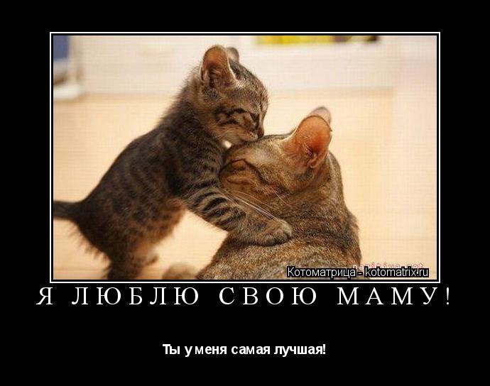Котоматрица: Я ЛЮБЛЮ СВОЮ МАМУ! Ты у меня самая лучшая!