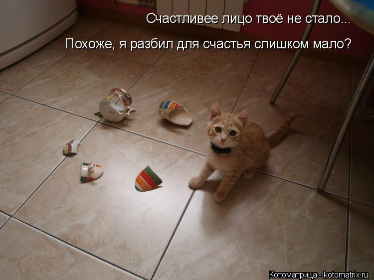 Котоматрица: Счастливее лицо твоё не стало... Похоже, я разбил для счастья слишком мало?
