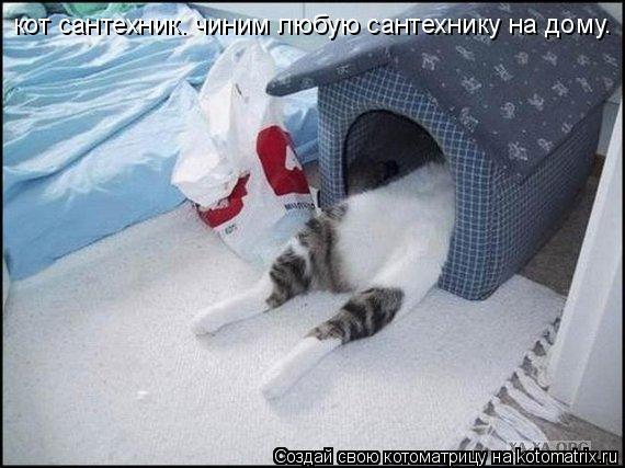 Котоматрица: кот сантехник. чиним любую сантехнику на дому.