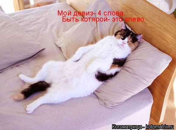 Котоматрица: Мой девиз- 4 слова.                                                     Быть котярой- это клево.