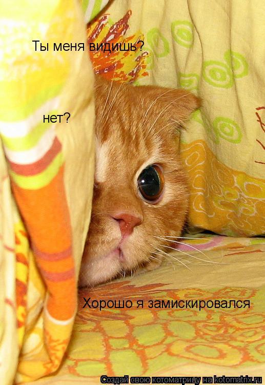 Котоматрица: Ты меня видишь? нет? Хорошо я замискировался